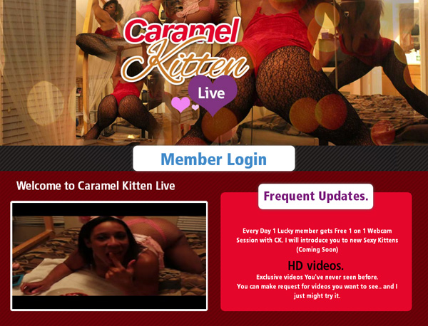 Caramel Kitten Live Account Info